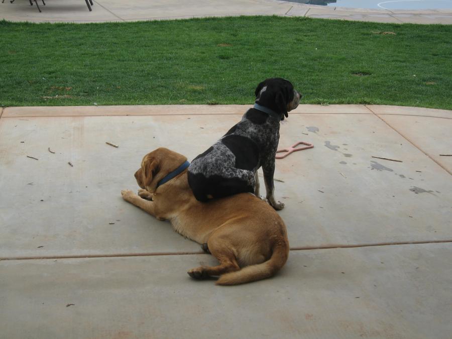 Name:  Dogs 025.jpg Views: 1950 Size:  64.5 KB