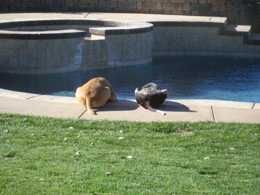 Name:  Dogs 054.jpg Views: 2020 Size:  116.0 KB